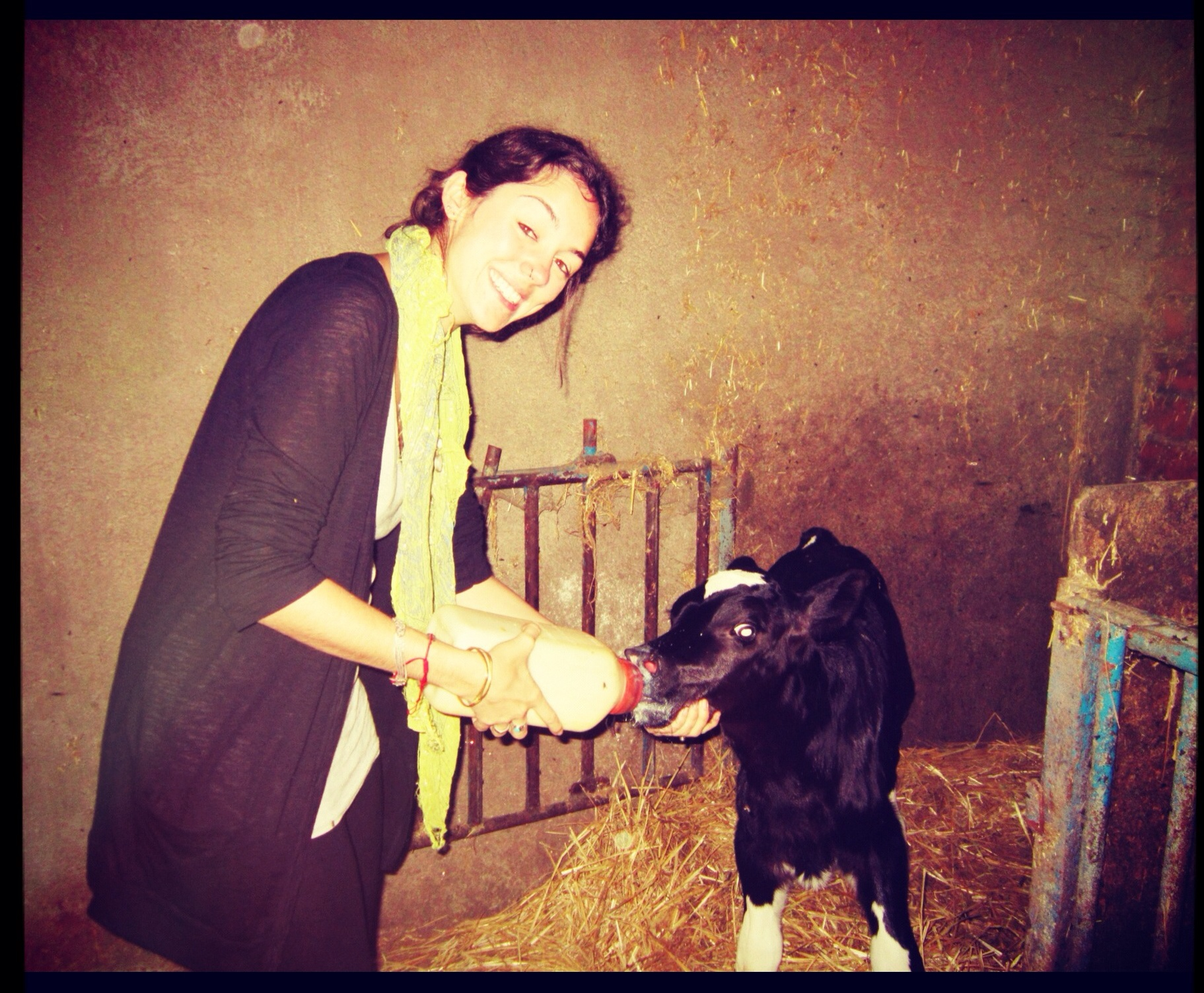 girl cow feeding farm